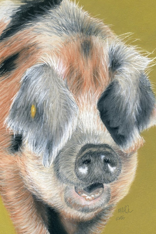 Oxford Sandy Pig at Old Hall Farm- Print
