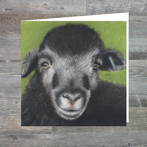 Powdermill Herdwick Lamb- Greetings Card (15x15cm)Highland Calf At Big Ridge