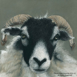 """""""Swaledale at Sow How Farm"""""""