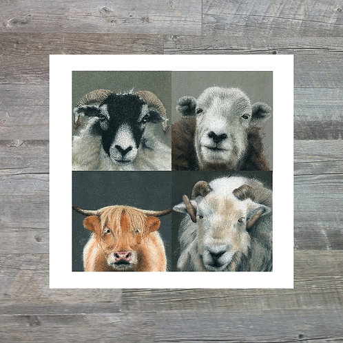 Multipack 15x15cm Greetings Card
