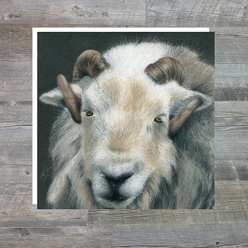 Herdwick Tup At Abbots Reading Farm - Greetings Card (15x15cm)