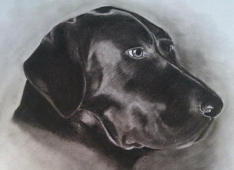 Charcoal Dog Portrait