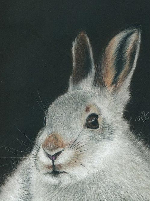 Monadliath Mountain Hare- Limited Edition Print