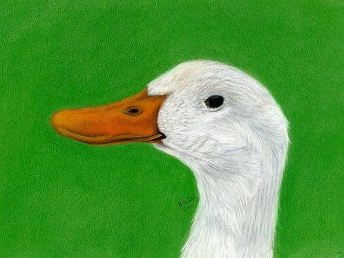 Ayelsbury Duck at Old Hall Farm- Limited Edition Print