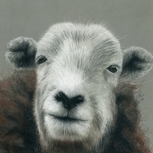 Herdwick Ewe at The Riddin- Limited Edition Print