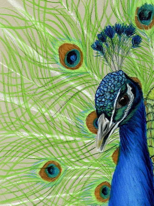 Peacock- Limited Edition - Limited Edition Print