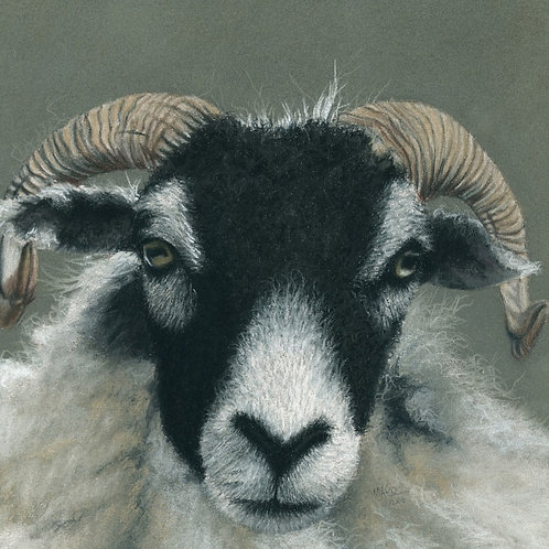 Swaledale at Sow How Farm- Limited Edition Print