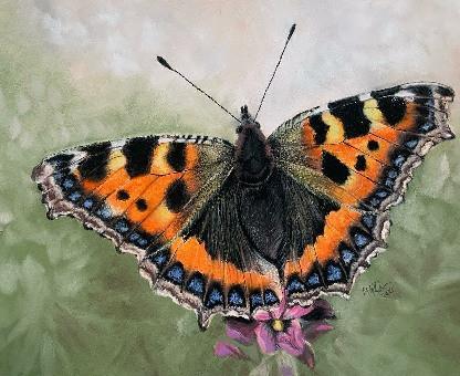 Butterfly Web Version.jpg
