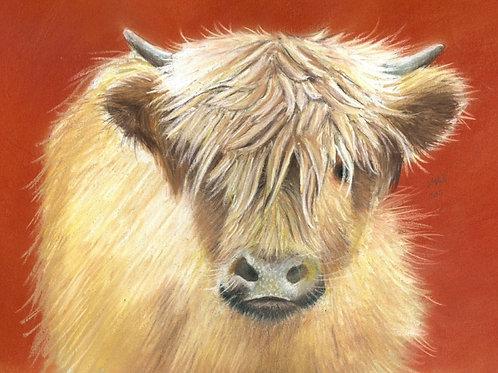 Highland Calf at Spanham Farm-Limited Edition Print
