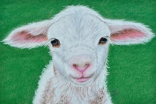 Lamb - Limited Edition Print