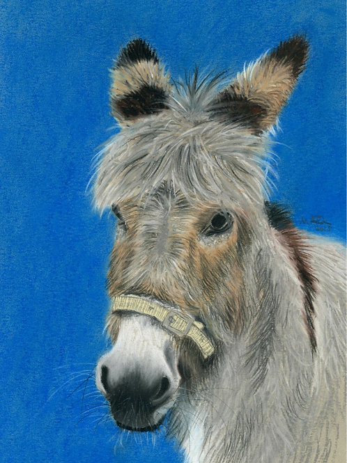 Mo the Donkey - Limited Edition Print