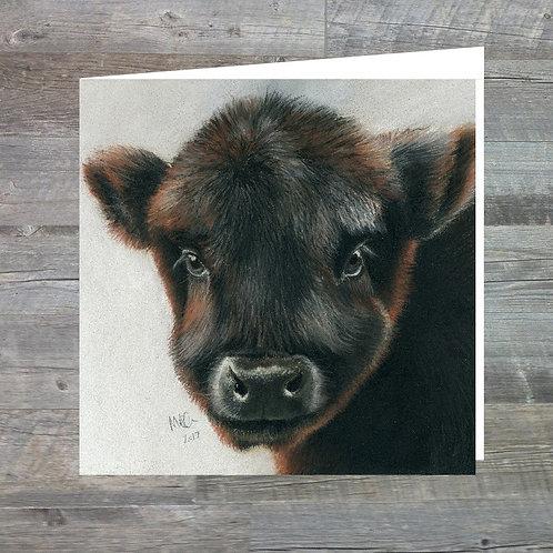Calf at Big Ridge - Greetings Card (15x15cm)Highland Calf At Big Ridge