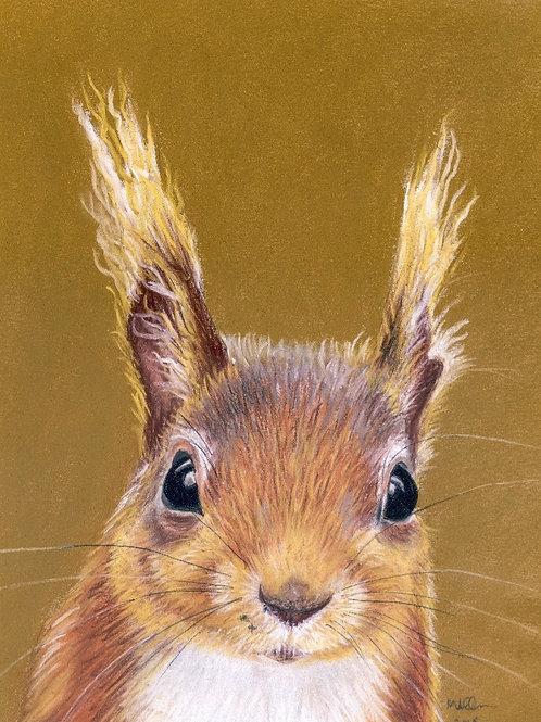 British Red Squirrel- Print