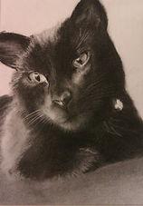 Charcoal Cat Portrait