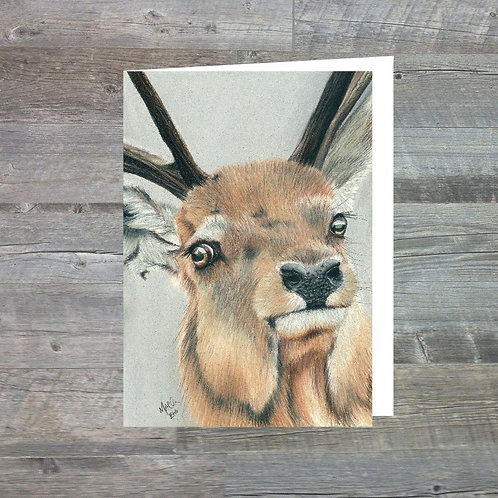 Red Deer Stag At Glen Cannich - Greetings Card (A6)