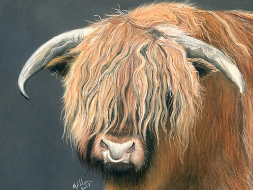 Highland Bull at Abbots Reading Farm- Limited Edition Print