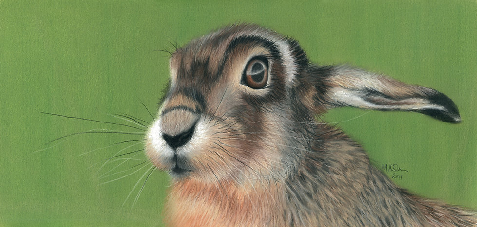 Hare In The Long Grass Mandy Allan.JPG