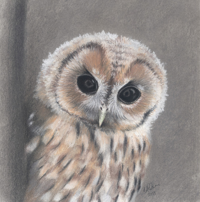 Good Morning Little Tawny- By Mandy Alla