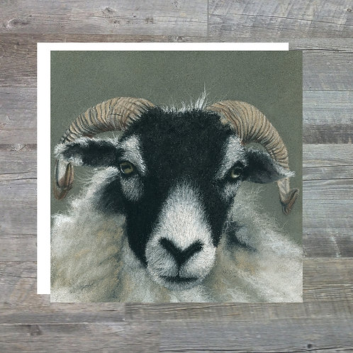 Swaledale Ewe At Sow How Farm - Greetings Card (15x15cm)