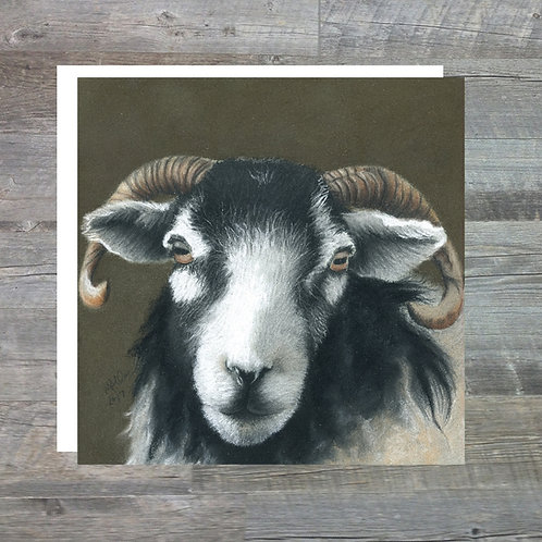 Swaledale Ewe At Spanham Farm - Greetings Card (15x15cm)