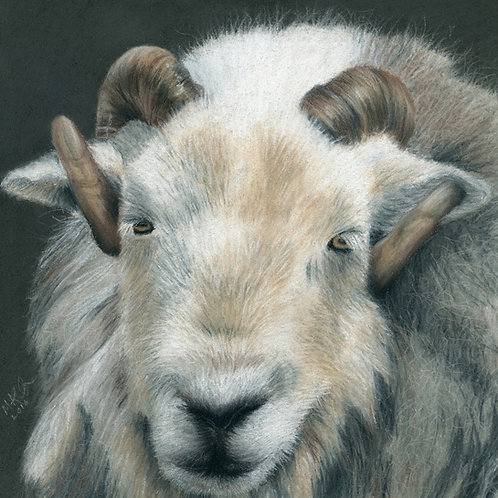 Herdwick Tup at Abbots Reading- Print