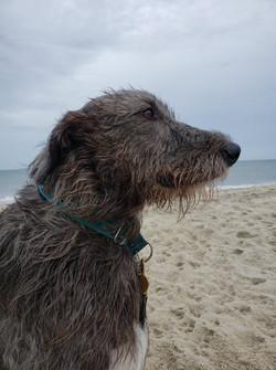 Violet.Beach.8.25.20