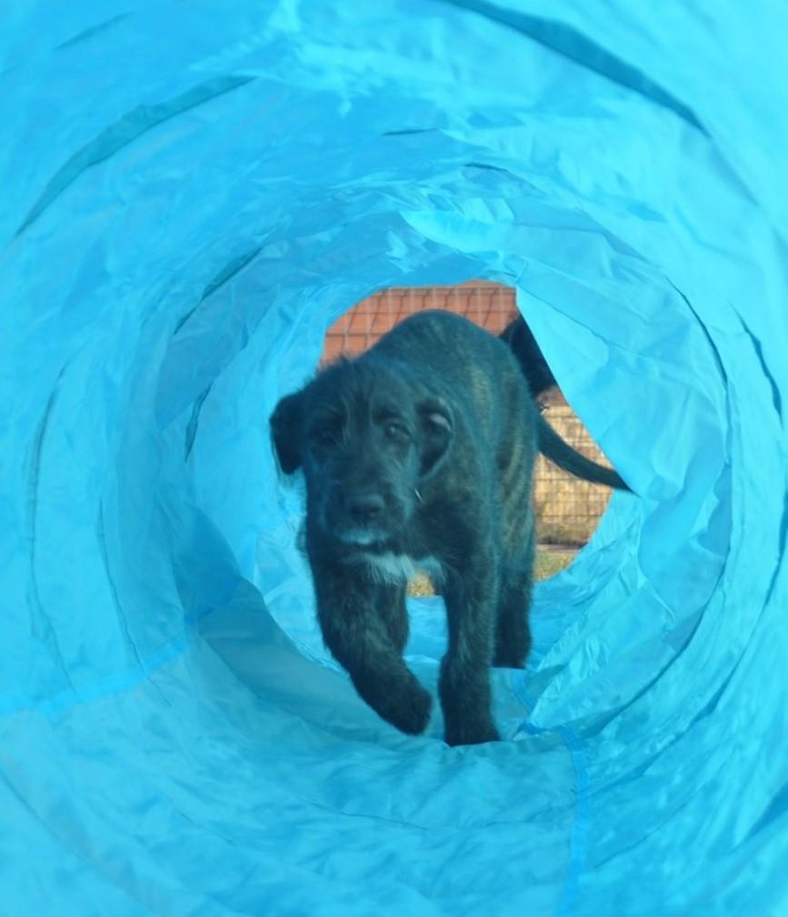Diana.Vreeken.Puppy.Tunnel