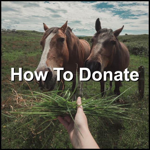 Donate-01.jpg