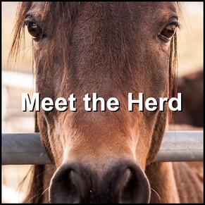 Herd-01.jpg