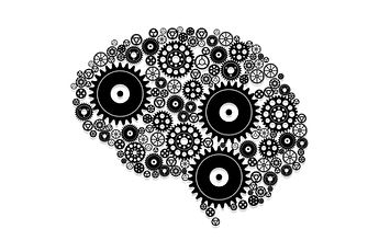 brain-4134613_1920.jpg