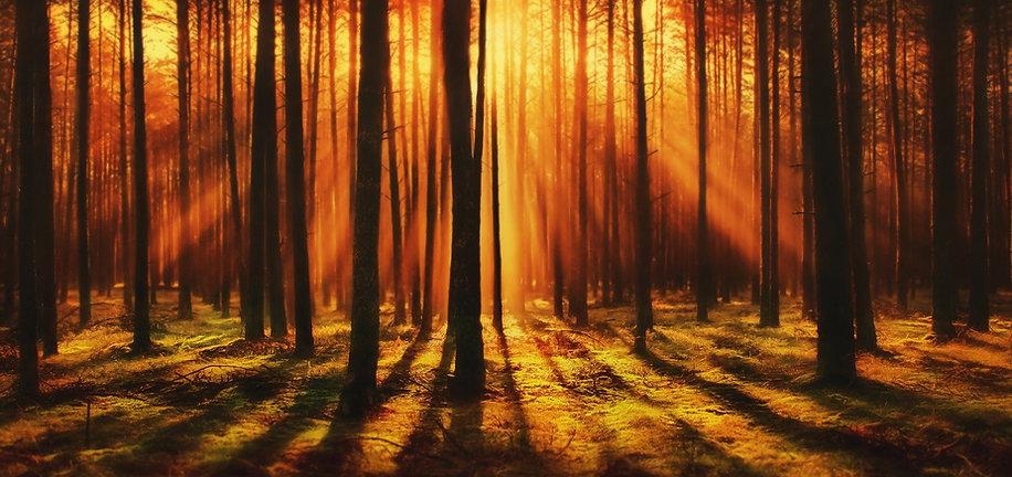 forest-4412721_1920.jpg