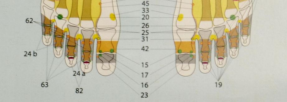 l'image montre une affiche servant à l'apprentissage de la position des méridiens sur les pieds