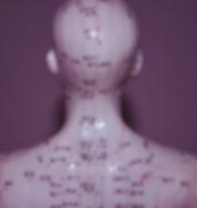 photo d'un mannequin de dos ou sont représentés les méridiens