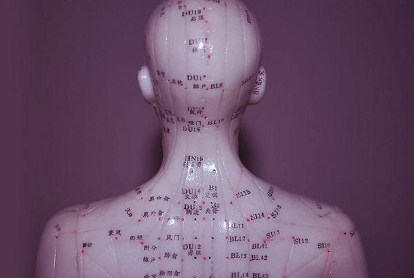 représentation des méridiens sur un mannequin