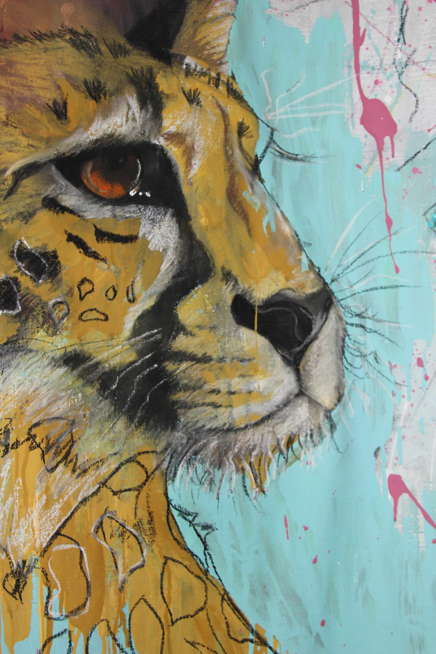 Cheetah close up