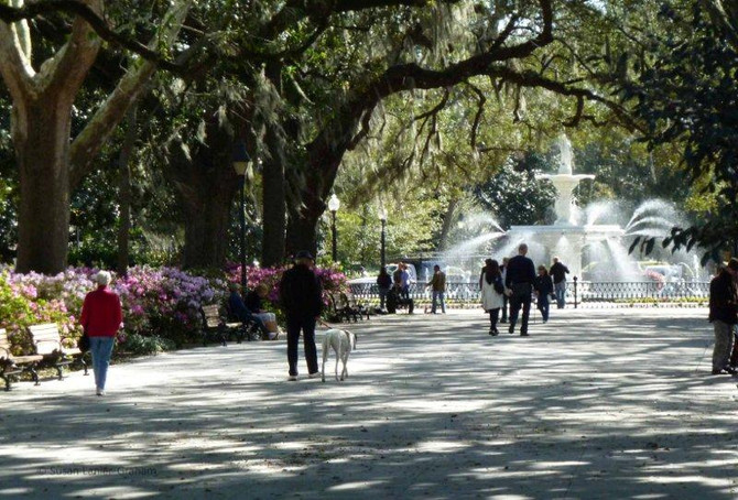 Public Invited to Comment on Bicycles in Forsyth Park