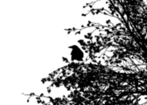 un cuervo sobre un árbol