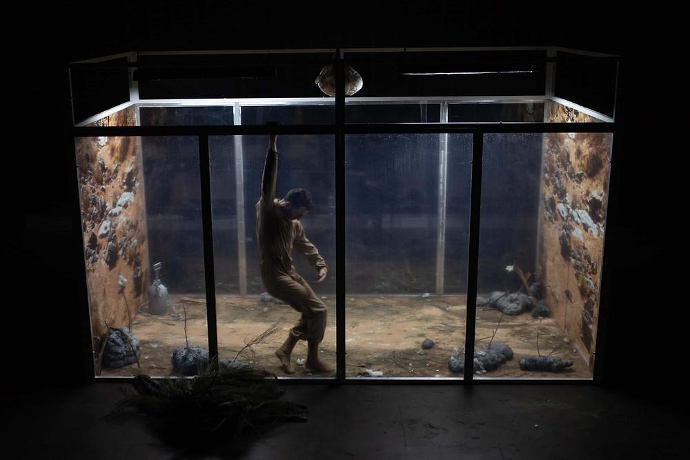 """Imagen de la pieza """"Crisálida"""" en la que se ve un terrario muy grande con un bailarín metido dentro."""