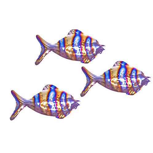 Shoal of 3 Stripy Tropical Grazing Fish