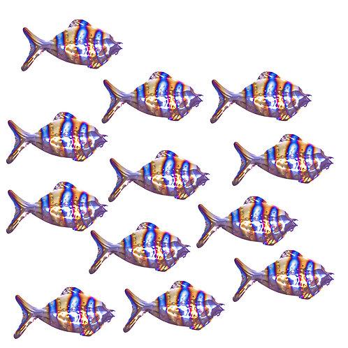Shoal of 12 Stripy Tropical Grazing Fish