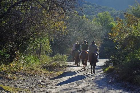 Enjoy a Horseback Riding Lesson
