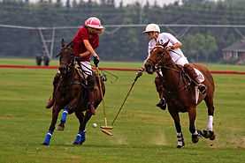 Take in a Polo Match