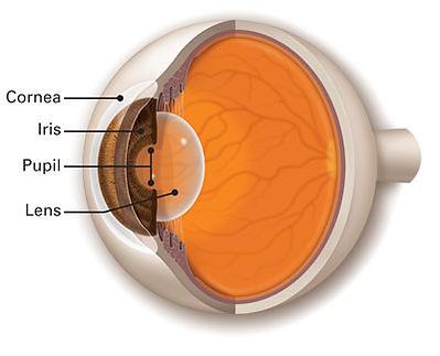 Cornea-Iris-Lens-Pupil-Optimized.jpg
