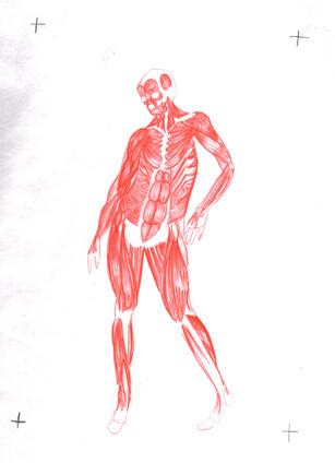 Muscle 2.jpg