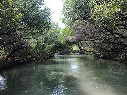 tainan mangroves.jpg