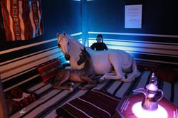 Al-Marah Arabian Horse Gallery Opening 6.12.2010 (203)