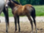 Nash Hesster 20 foal.jpg