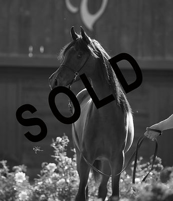 SOLD.Varian_8-18_Carolyn_412.Donnachella