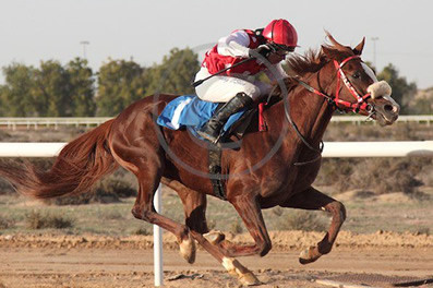 CALLATERAL Wins in UAE