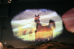 Al-Marah Arabian Horse Gallery Opening 6.12.2010 (198)